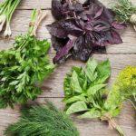 plantes et herbes aromatiques à faire pousser chez soi