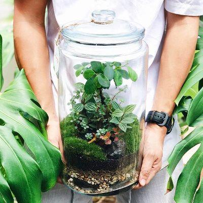 terrarium tropical humide