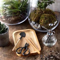 Photo représentant un petit KIT pour fabriquer un terrarium.