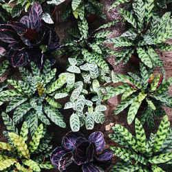 photo du compte instagram jarijungle selection de plantes pour terrarium