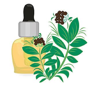 Parfum Ravintsara
