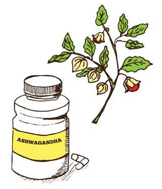 Comment consommer l'Ashwagandha ?