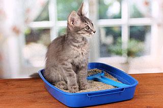 Changer la litière du chat