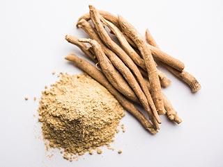 Les racines séchées d'Ashwagandha et réduites en poudre racines séchées et réduites en poudre
