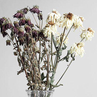 Que faire avec des fleurs fanées ?
